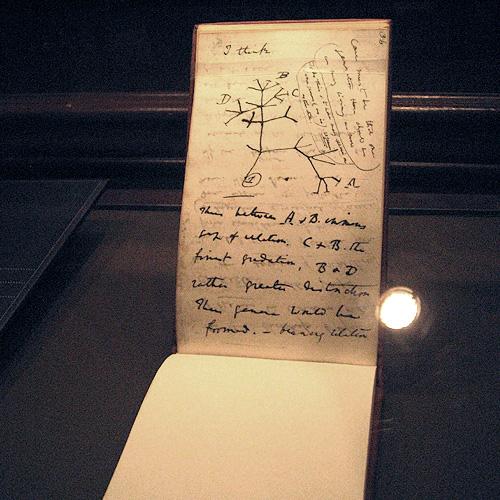 Charles darwins sketchbook